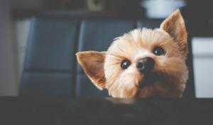 perro_viajar_consejos