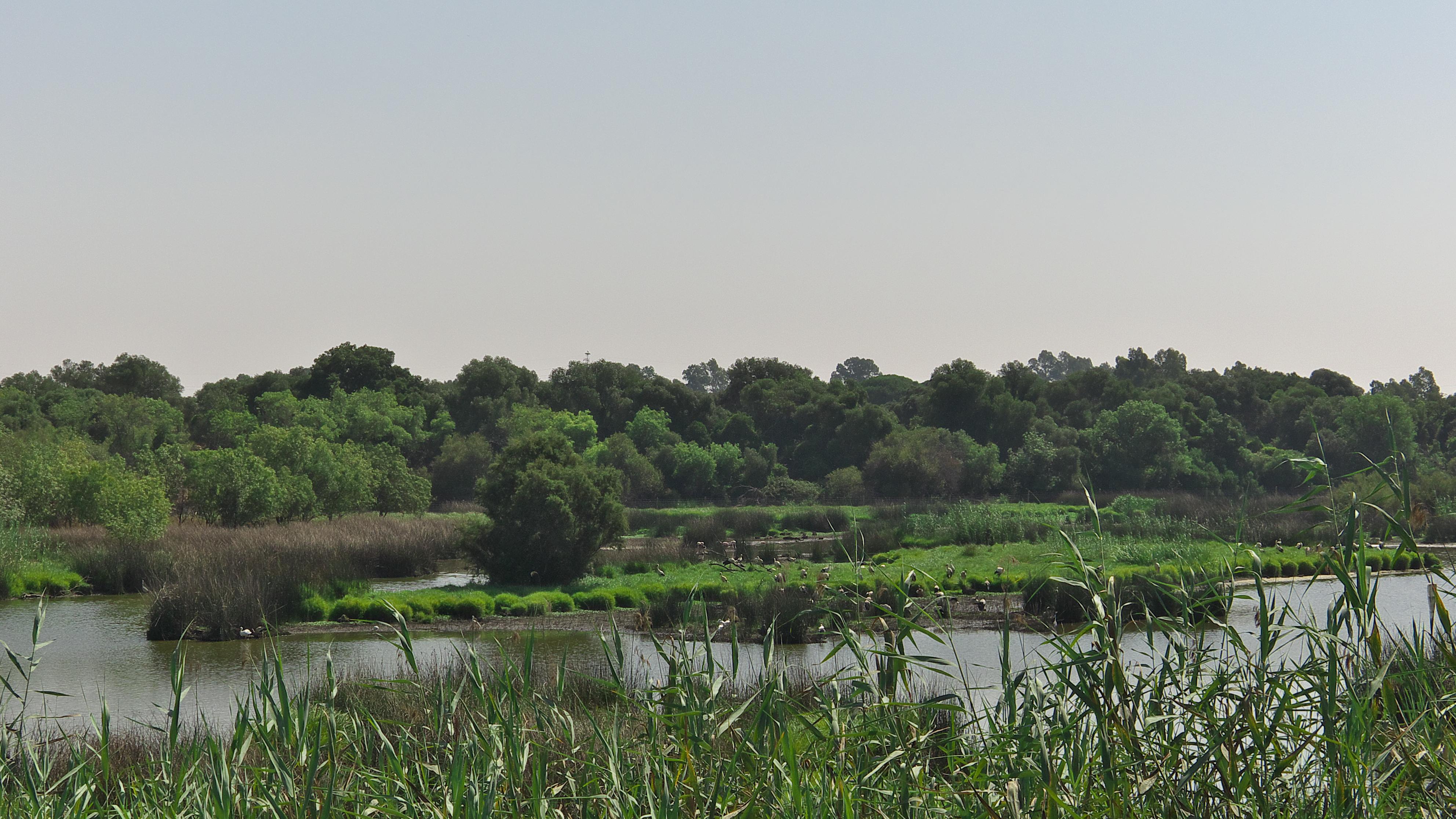 Doñana-luxecarvaning